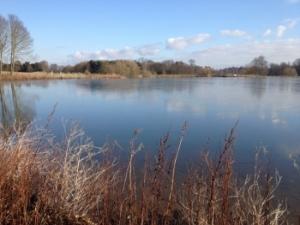 Longhorn Lake at Thoresby Hall Estate