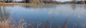The Longhorn -view of the lake at Thoresby Hall & Estate